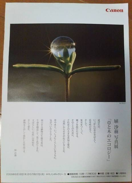 20090725 埴沙萌写真展「草と木のエコロジー」1.jpg
