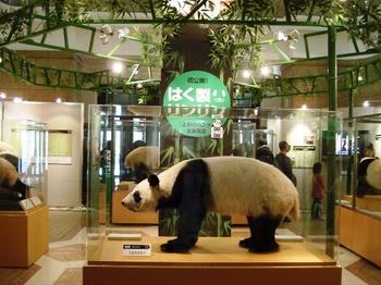 20090222 科博パンダ展3.JPG
