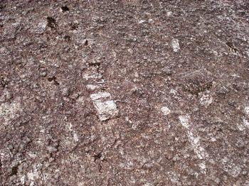 20090517 4花崗岩 正長石.JPG