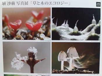 20090725 埴沙萌写真展「草と木のエコロジー」2.jpg