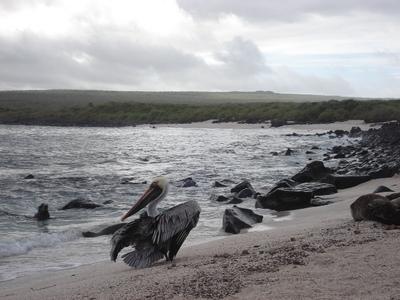 20100505 1エスパニョーラ島06s.JPG