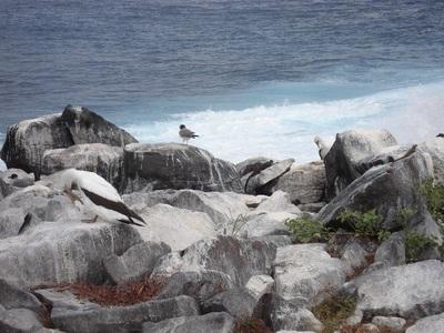 20100505 1エスパニョーラ島17.JPG
