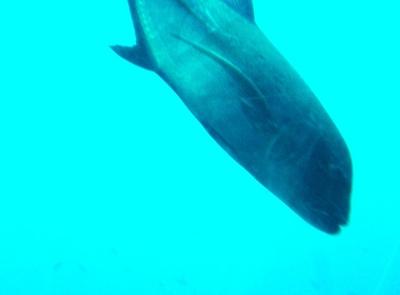 20110219 Submarine Atlantis13.JPG