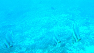 20110219 Submarine Atlantis15.JPG