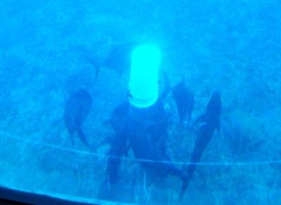 20110219 Submarine Atlantis4.JPG
