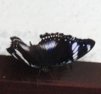 20110811 7.JPG