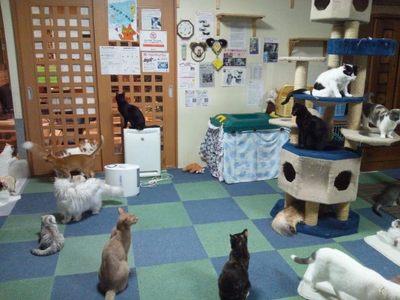 20120524 猫のまほう1.JPG