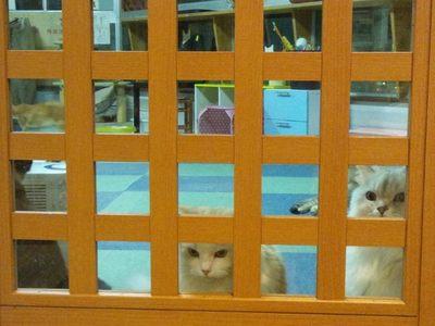 20120524 猫のまほう5.JPG