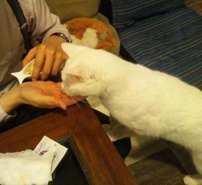 20120524 猫のまほう7.JPG