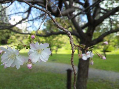 20121013 旧芝離宮庭園4.JPG