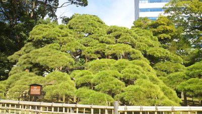 20121013 浜離宮庭園18.JPG