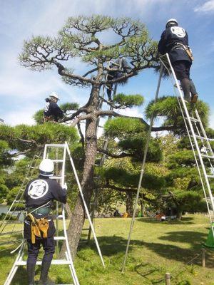 20121013 浜離宮庭園6.JPG
