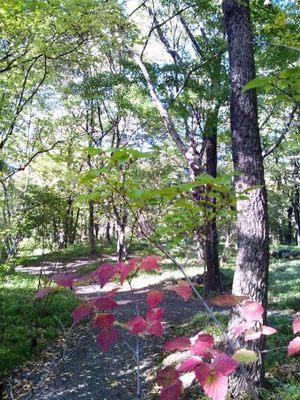 20121110 二の丸雑木林.JPG