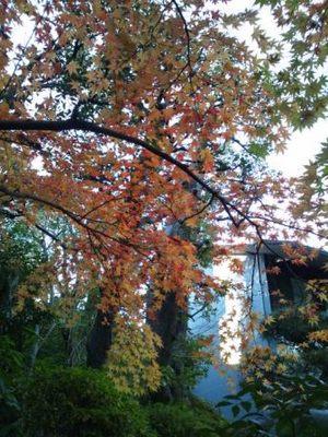 20121209 根津美術館庭園1.JPG