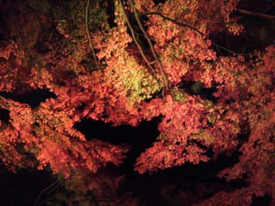 20101128 都庭園美 紅葉ライトアップ4.jpg