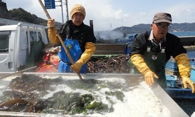 20110326 4鳴門わかめ漁.JPG
